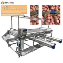 Potato and Onion Sorting Conveyor Machine