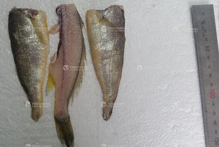 fish splitting machine