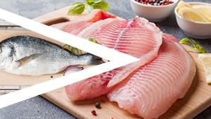 Fish Filleting Plan
