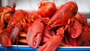 Lobster is delicious but difficult to clean? Washing machine is a good helper
