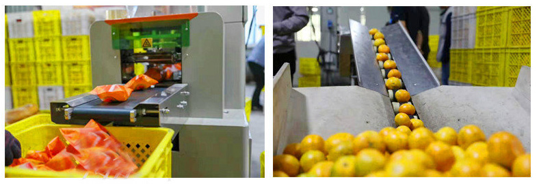 Fully Automatic Fruit Packing Machine