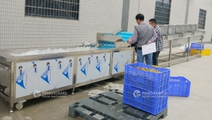 Fengxiang cooperated with Nanyao project to introduce greengage deep processing equipment