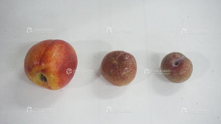 Belt Type Vegetable and Fruit Classifier Machine
