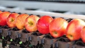 Automatic Sorting Equipment Helps Production Enterprises Enter Food Diversification Market