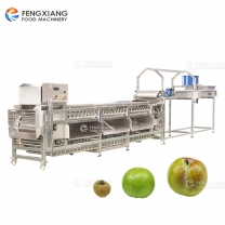 Fruit Potato Onion Sorting Machine with Inspection Conveyor